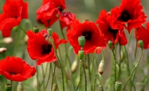 Who Are the Tall Poppies