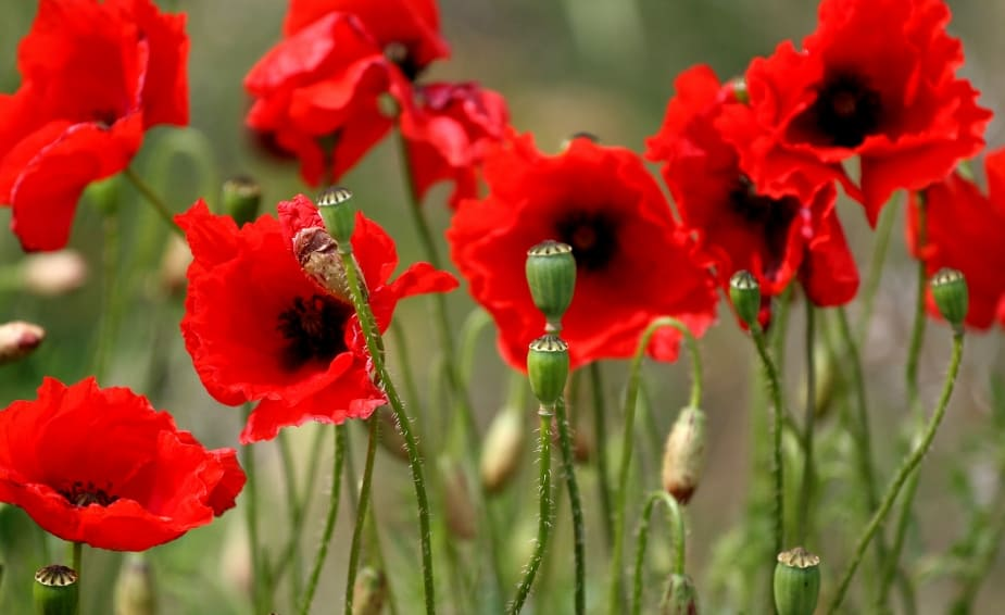 Who are the Tall Poppies and Why You Should Care?