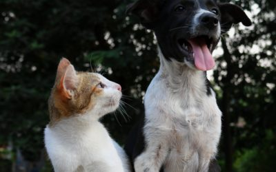 Quiz: Are you a dog or a cat?